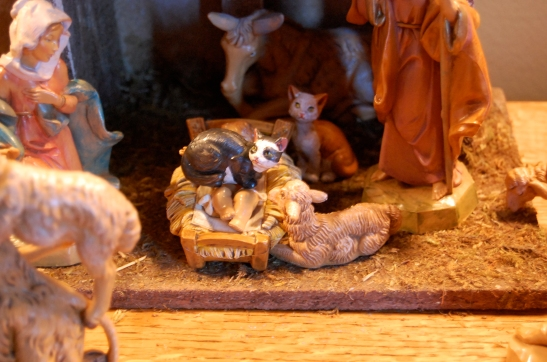 """Don't just stand there Joseph! Help me for Chrissakes! This barn cat is trying to steal the breath of the new born King! Help!"""